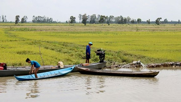 Flood submerges paddy fields, crops in Mekong delta