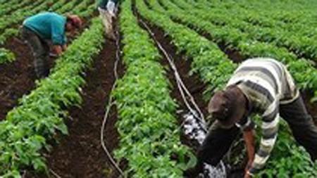 Drip irrigation increases crop productivity