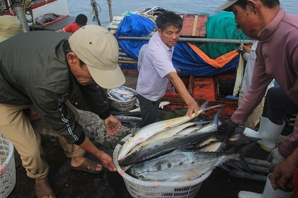 Central fishermen enjoy bumper Talang queen fish catch