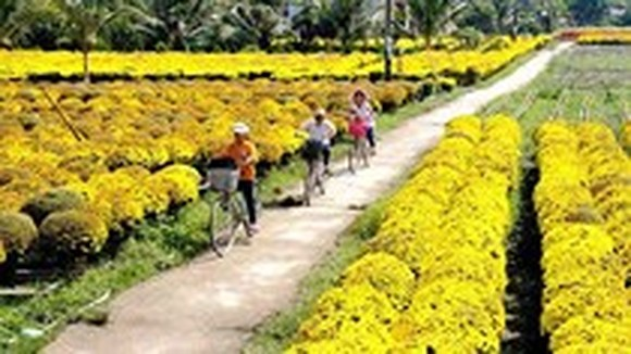 Ben Tre launches online portal to promote tourism