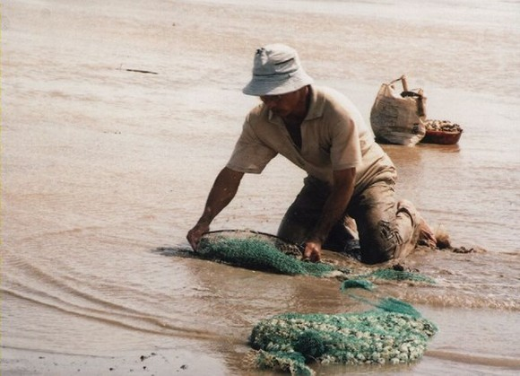Over 100 tons of clam in Ben Tre die due to high salinity level