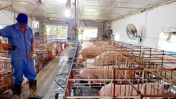 Some localities in Vietnam declared  free from Africa Swine Fever