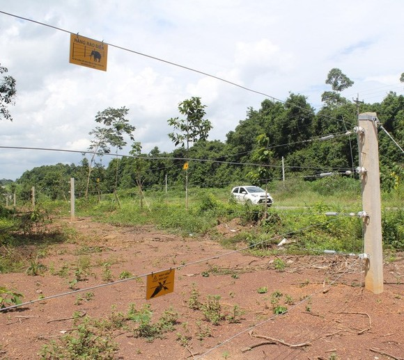 A 50km long electric fence has been put into operation on a trial basis to prevent wild elephants from wandering into residential areas in Dong Nai province. (Photo: dantri.com.vn)