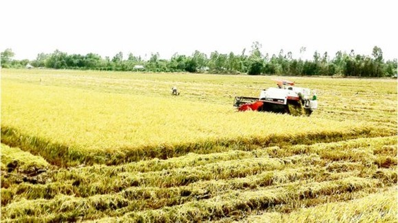 The project on application of remote sensing information technology into the agricultural production has been implemented in ten provinces of Mekong Delta region since 2012.