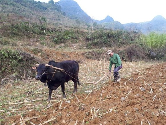 A farmer in Cao Bang province (Photo: VNA)