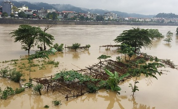 Rise of water level on Hong River destroy vegetable and flower crops.