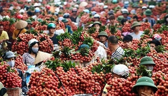 Vietnamese lychee eligible for export to US and Chinese markets