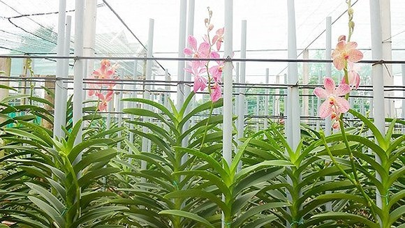 HCMC put into production of 55 new plant varieties