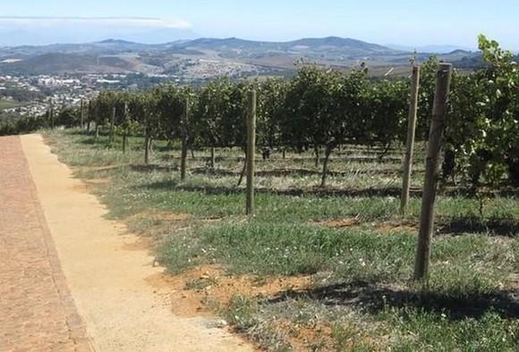 Grape farm in Cape Town, South Africa (Photo: VNA)