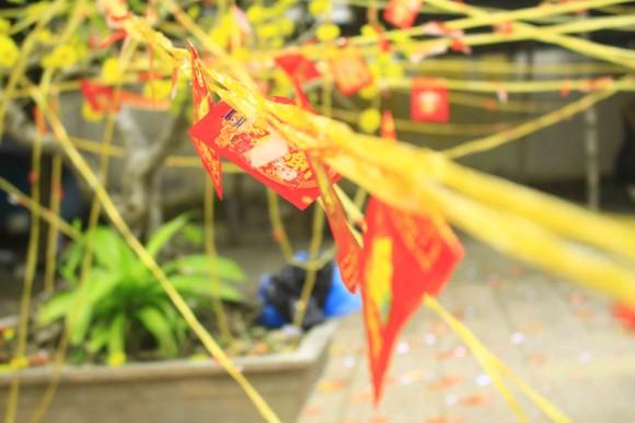 Mùng 1, hái lộc đầu năm với ngư dân Quảng Ngãi ảnh 4