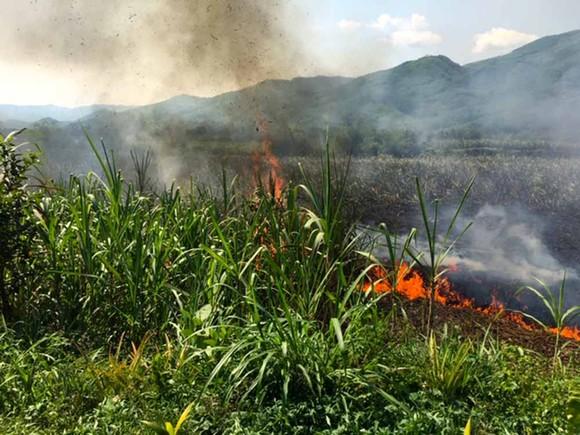 Cháy lớn thiêu rụi hơn 2ha ruộng mía sắp thu hoạch  ảnh 1
