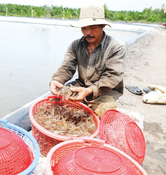 3 khó khăn chính kiềm hãm ngành thủy sản  ảnh 2
