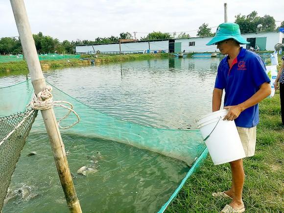 Tập trung sản xuất giống thủy sản  ảnh 1