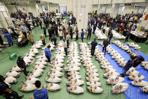 當地時間10月11日,日本東京,取代築地市場的豐洲水產市場正式開業。(圖源:共同社)