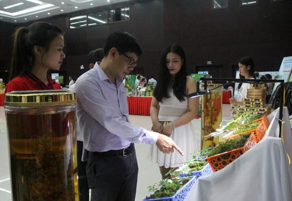Quảng Nam đã ứng dụng khoa học, công nghệ vào bảo tồn và phát triển sâm Ngọc Linh