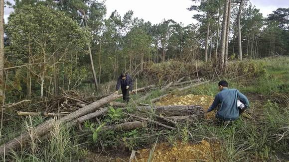 Khởi tố bị can phá gần 4ha rừng thông, chiếm đất ảnh 3