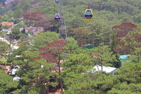 Hàng loạt cây thông ở Đà Lạt bị 'bức tử' trong khu dân cư ảnh 5