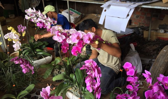 Trao tặng hoa, hạt giống cho các chiến sĩ Trường Sa ảnh 3