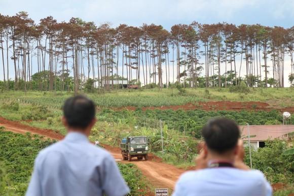 Khởi tố, bắt giam 6 đối tượng huỷ hoại hàng trăm cây thông ở Lâm Đồng ảnh 1