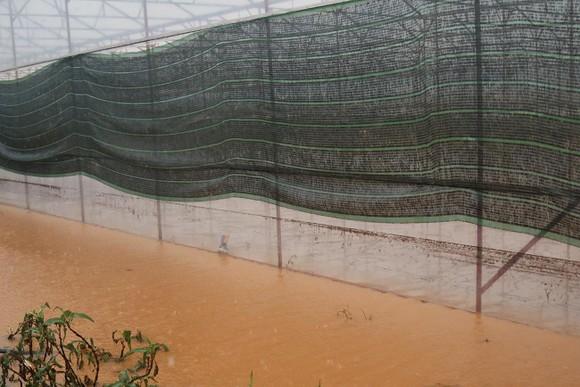 Mưa lũ làm hơn 1.350 căn nhà ở Lâm Đồng bị ngập ảnh 8