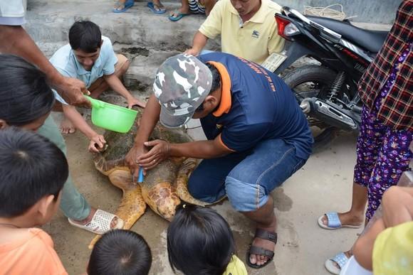 Cứu hộ thành công cá thể rùa biển đi lạc vào Nhà máy Nhiệt điện Vĩnh Tân 2 ảnh 2