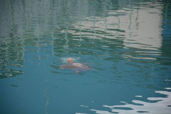 Cứu hộ thành công cá thể rùa biển đi lạc vào Nhà máy Nhiệt điện Vĩnh Tân 2 ảnh 1