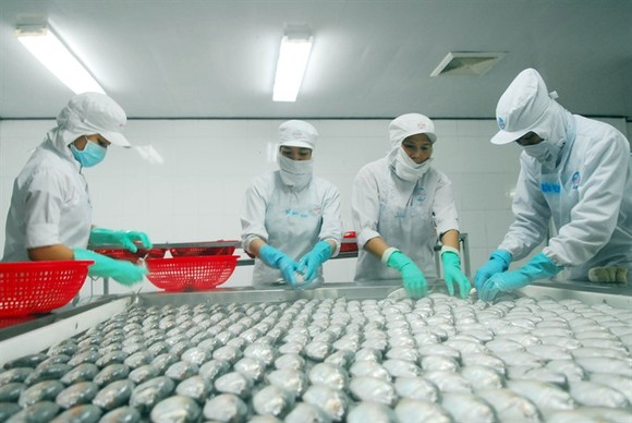 Seafood processing at the Ngo Quyen Joint Stock Company in Chau Thanh District, Kien Giang Province. (Photo: VNA/VNS)