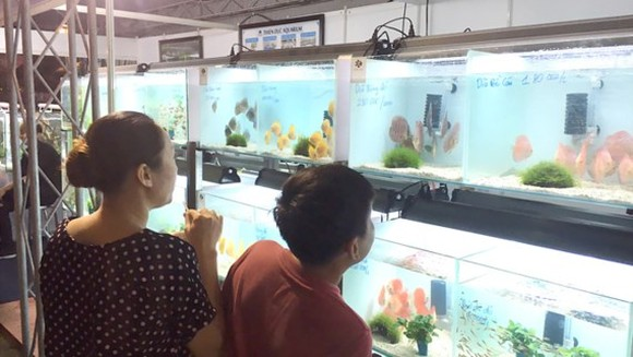 Ornamental fish tanks showcased at the fair (Photo: SGGP)