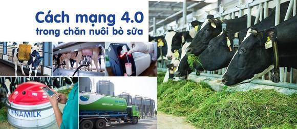 Cách mạng 4.0 trong chăn nuôi bò sữa giúp việc quản lý và vận hành trang trại tối ưu hóa được hiệu quả