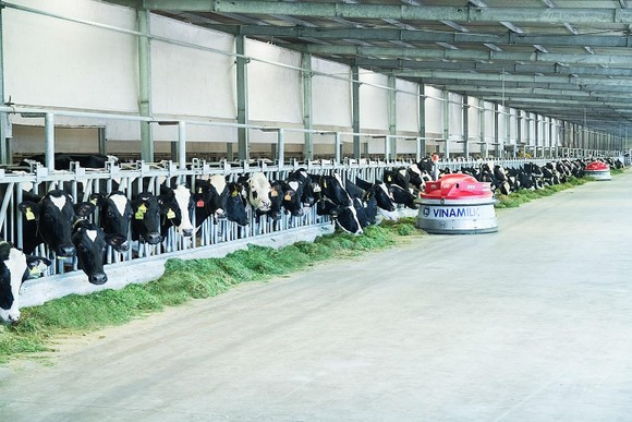 Ứng dụng công nghệ 4.0 vào chăn nuôi bò ảnh 2