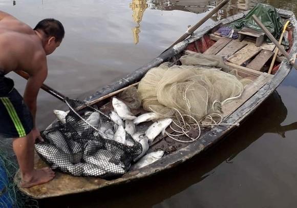 Sau đợt mưa lũ kéo dài, nhiều cá nuôi lồng bè trên sông bị chết khiến người dân thiệt hại nặng