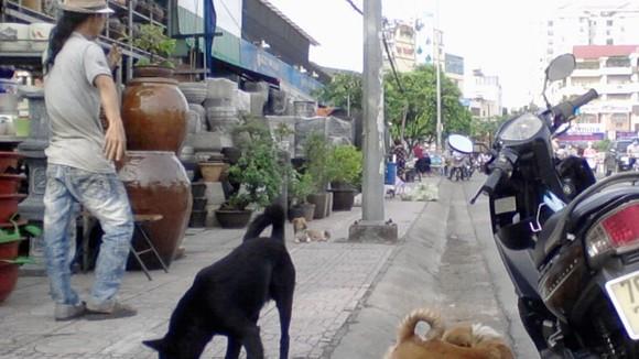Tình trạng thả rong chó ra đường vẫn diễn ra khá phổ biến  Ảnh: NGUYỄN ĐỨC NGUYÊN