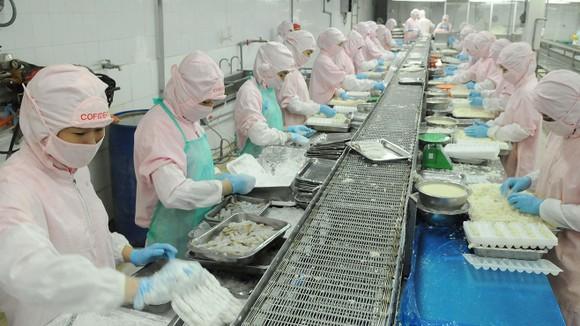 Chế biến tôm xuất khẩu sang Nhật tại Công ty Cofidec                                                                            Ảnh: CAO THĂNG