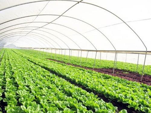 Đến năm 2030: Có 80.000 - 100.000 doanh nghiệp hoạt động trong lĩnh vực nông nghiệp