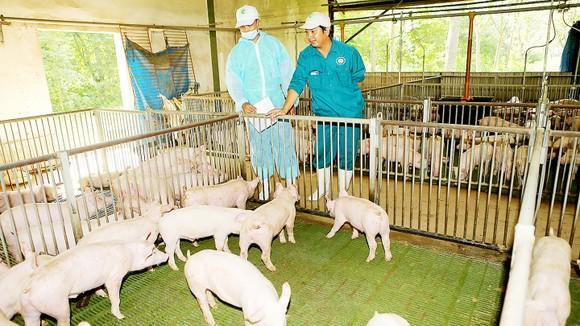 Ngành chăn nuôi gian nan hơn với CPTPP ảnh 1