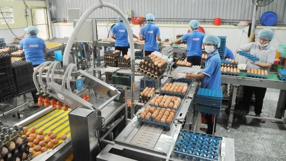 Tập trung sơ chế và phân phối sản phẩm sạch ảnh 2