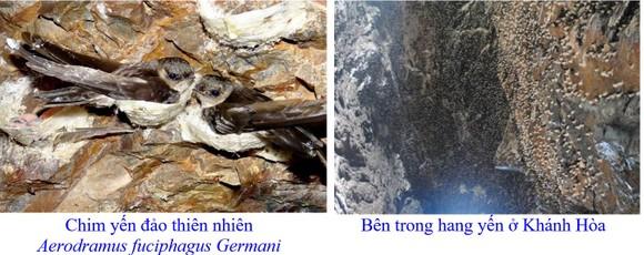 Phát triển bền vững nghề nuôi chim Yến tại Nam Trung bộ và Tây Nguyên ảnh 1