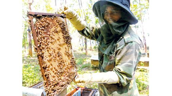 Mật ong chan cơm nguội ảnh 1