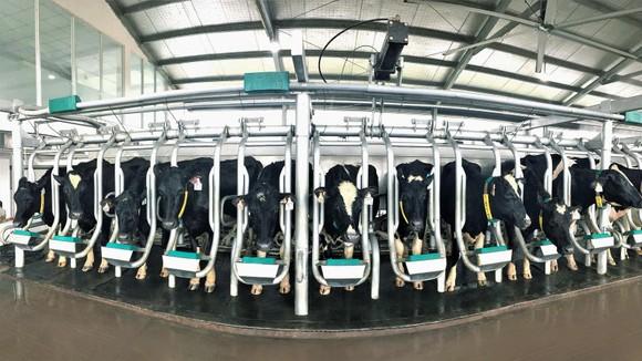 Phát triển ngành chăn nuôi bò sữa Việt Nam tiệm cận với thế giới ảnh 2