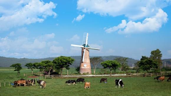 Phát triển ngành chăn nuôi bò sữa Việt Nam tiệm cận với thế giới ảnh 1