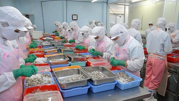 Workers processing shrimp for export (Photo: SGGP)