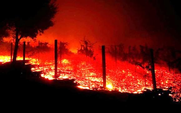 Cháy rừng lịch sử ở California, ít nhất 42 người chết ảnh 1