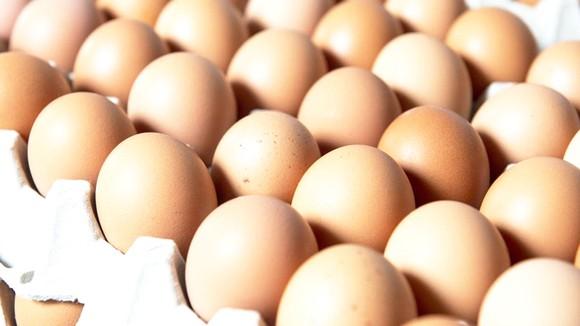 Australia thu hồi trứng nhiễm khuẩn salmonella