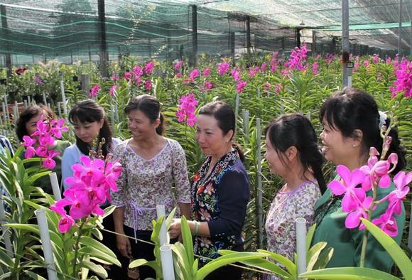 Rực rỡ sắc màu tại Festival Hoa lan TPHCM ảnh 1