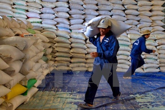 Egypt to import 1 million tonnes of Vietnamese rice