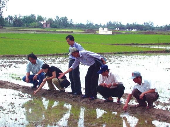 Ông Lê Quốc Phong - TGĐ (bìa trái) cùng các chuyên gia nghiên cứu tại ruộng lúa
