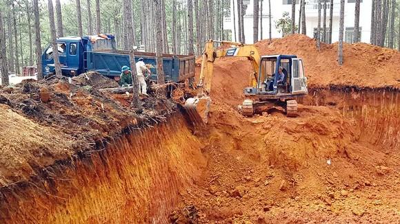 Thêm dự án du lịch tàn phá 300m² rừng thông