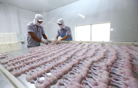 Chế biến sản phẩm ếch xuất khẩu. (Ảnh: Danh Lam/TTXVN)