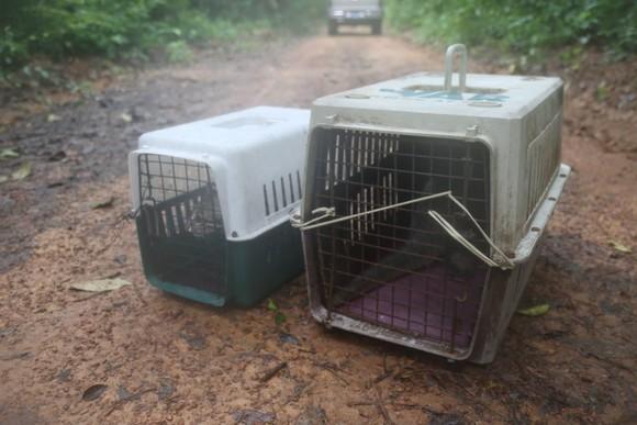 Hai cá thể tê tê vàng và mèo được thả rừng về Vườn quốc gia Cát Tiên ảnh 1