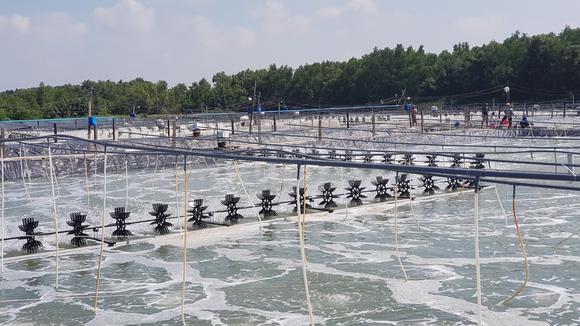 Xuất khẩu Thuỷ Sản Minh Phú đưa Tôm Việt vươn ra thế giới ảnh 2